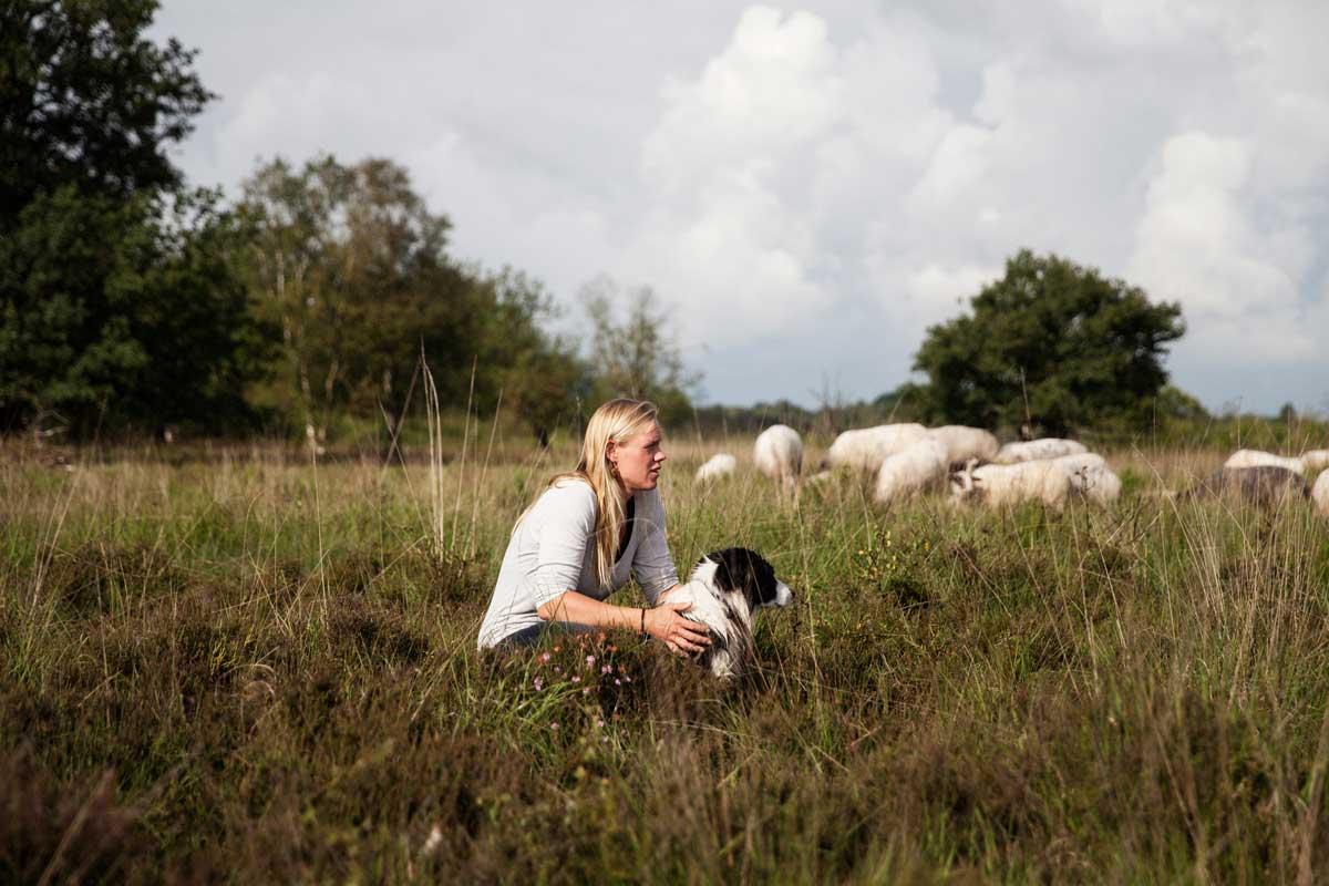 Lamsvlees van gescheperde schaapskuddes uit Natuurgebieden in Nederland
