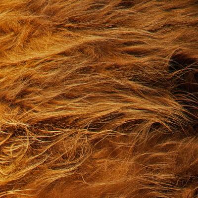 Vacht-Schotse-Hooglander-ecologisch-gelooid