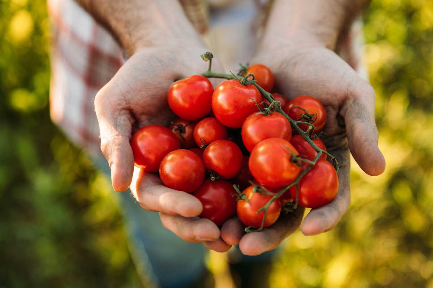op-de-zorgboerderij-telen-van-groenten-en-fruit